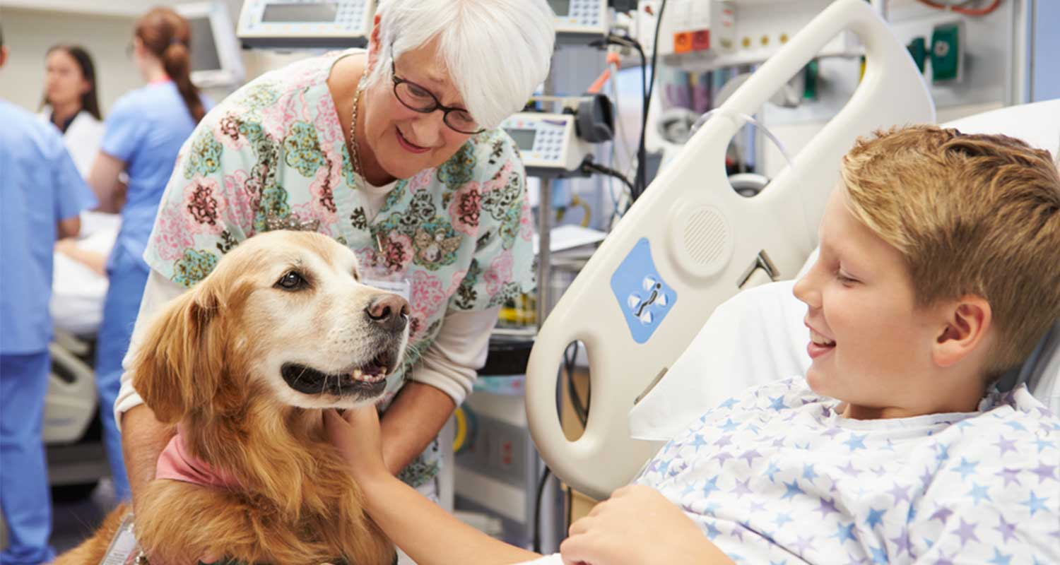 Therapy dog in hospital visiting sick child