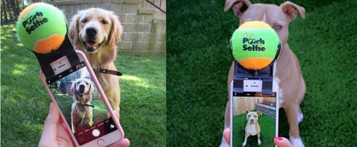 split screen image featuring the pooch selfie attached to a camera while taking a picture of dog on the left and right side