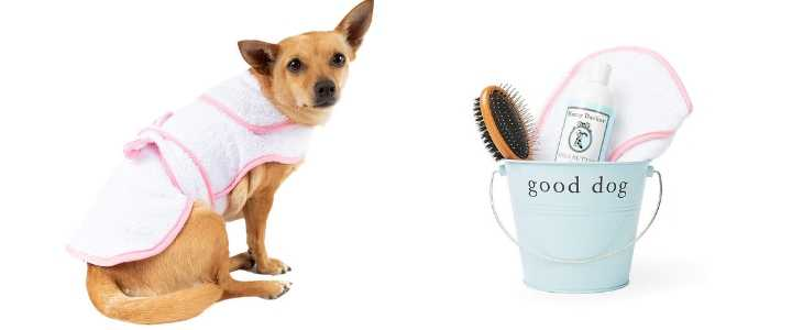 dog wearing a white doggie bath robe with pink trim and bucket holding a brush, shampoo and washcloth