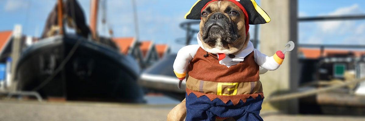 bulldog dressed as a pirate
