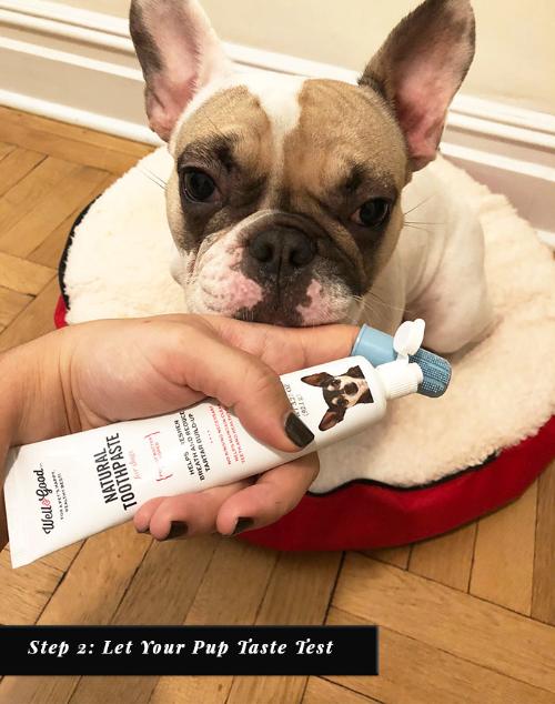 Step 2: Let Your Pup Taste Test