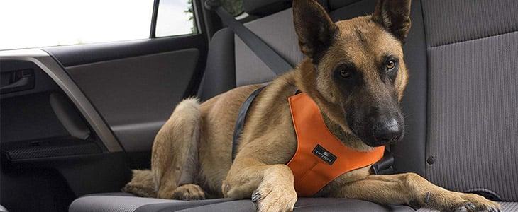 Crash-Tested Doggy Seatbelts