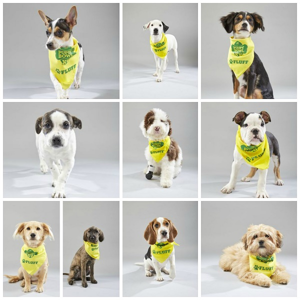 collage of the second group of nine dogs on Team Fluff for the 2019 Puppy Bowl