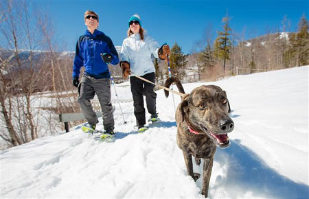 spruce-peak-dog-snowshoeing