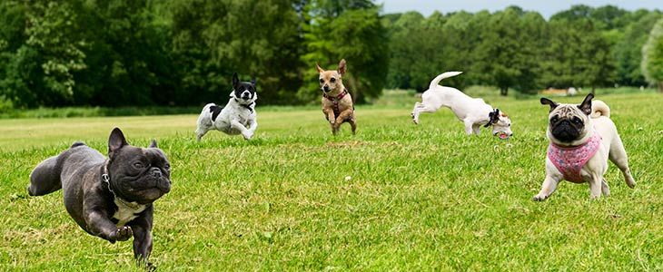 five different dogs frolicking in a field