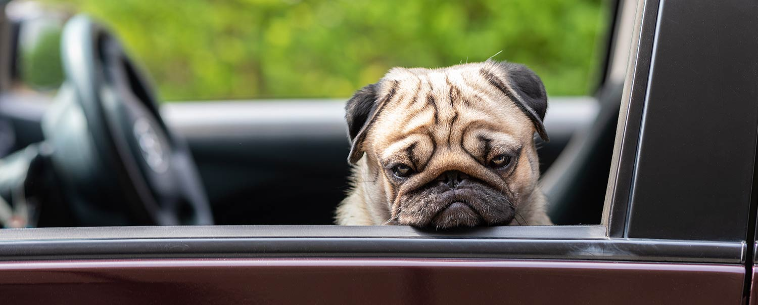 Why Does My Dog Whine in the Car?