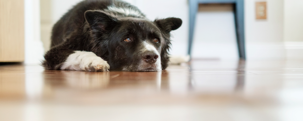 are-you-stressing-your-dog-out-hero