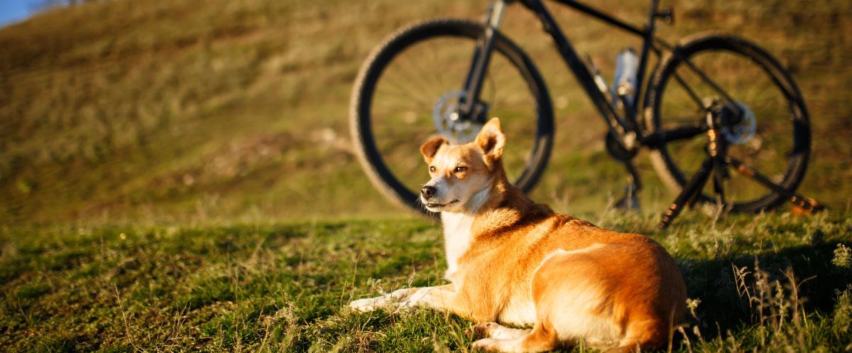 biking-hero