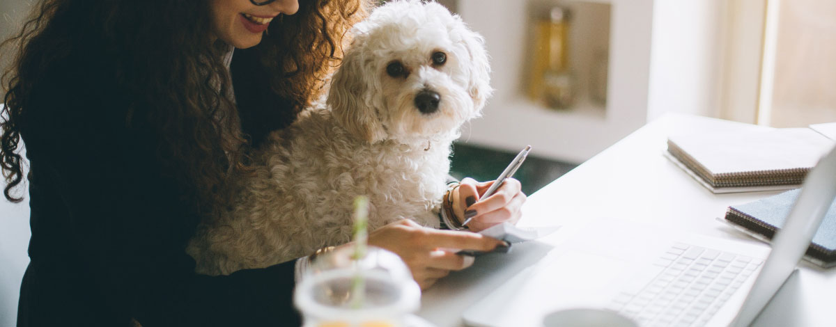 careers-dog-lovers-hero
