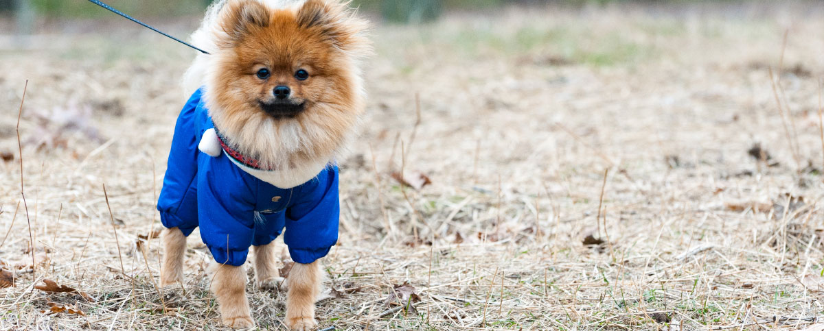 Does Your Dog Need to Wear a Winter Coat?