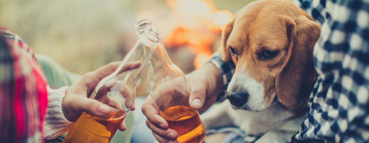 dangerous-foods-for-dog-hero
