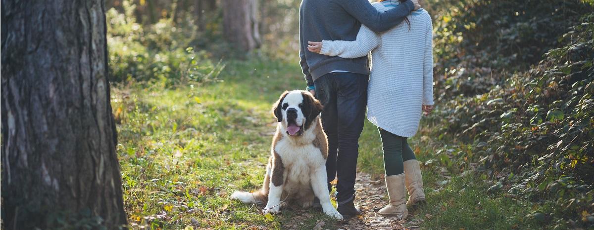 dog-and-dating-hero