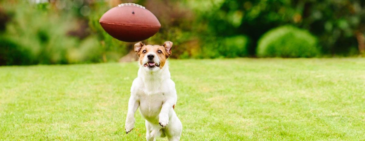dog-football-hero
