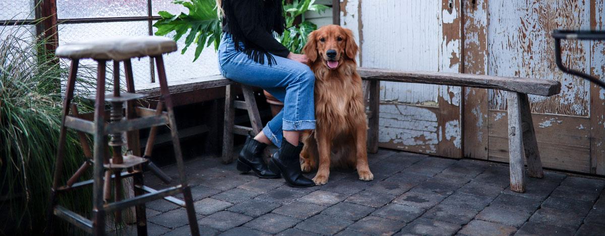dog-friendly-asheville-hero