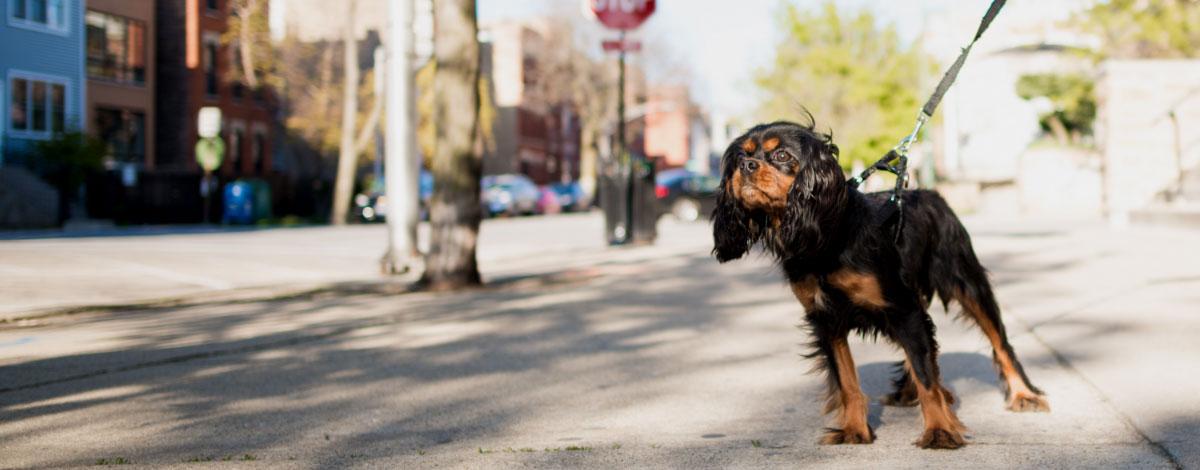 dog-friendly-pa-hero