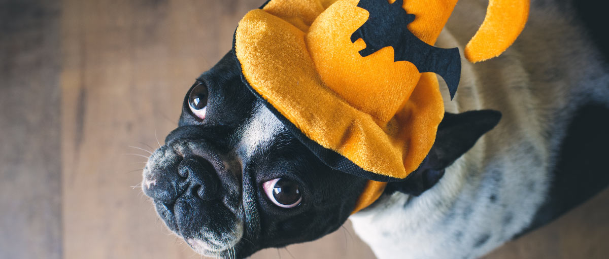 dog-halloween-costumes-diy-hero