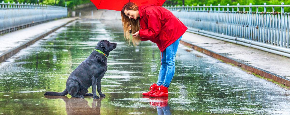 dog-hates-rain-hero