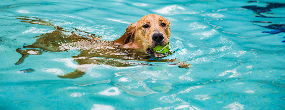 dog-hydrotherapy-hero