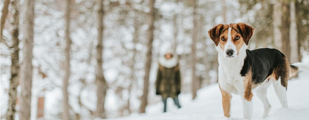 dog-in-winter-snow-vermont