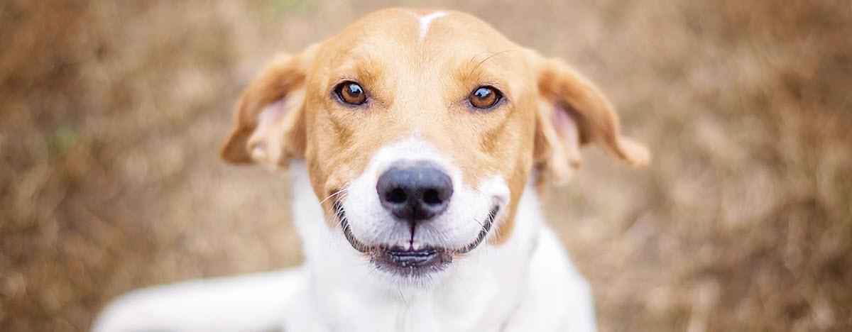 dog-names-desktop-hero