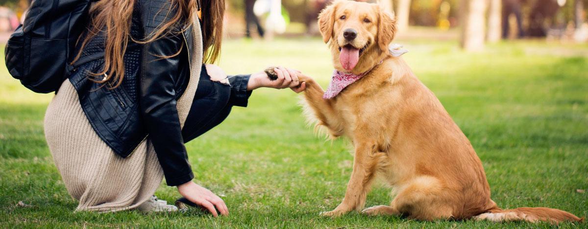 dog-paw-preference-hero