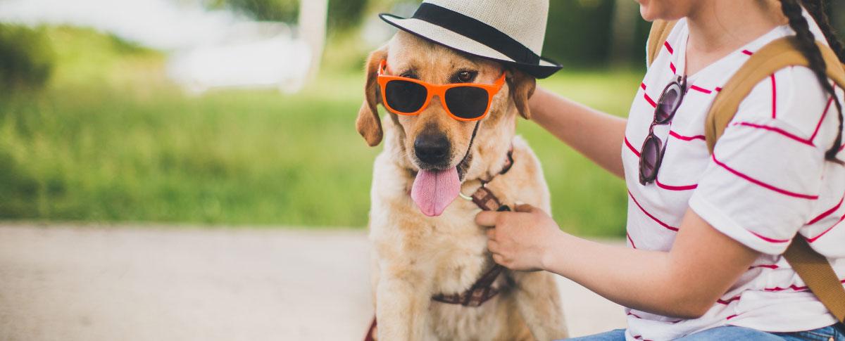 dog-person-hero