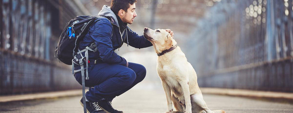 dog-sitter-desktop-hero
