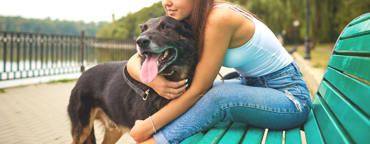 dog-summer-benefits-hero