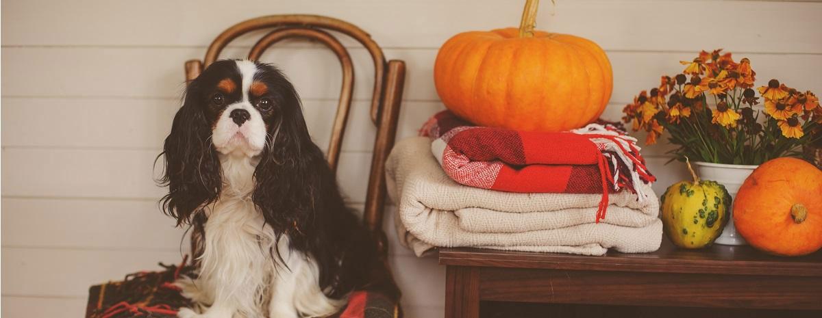 dog-thanksgiving-hero