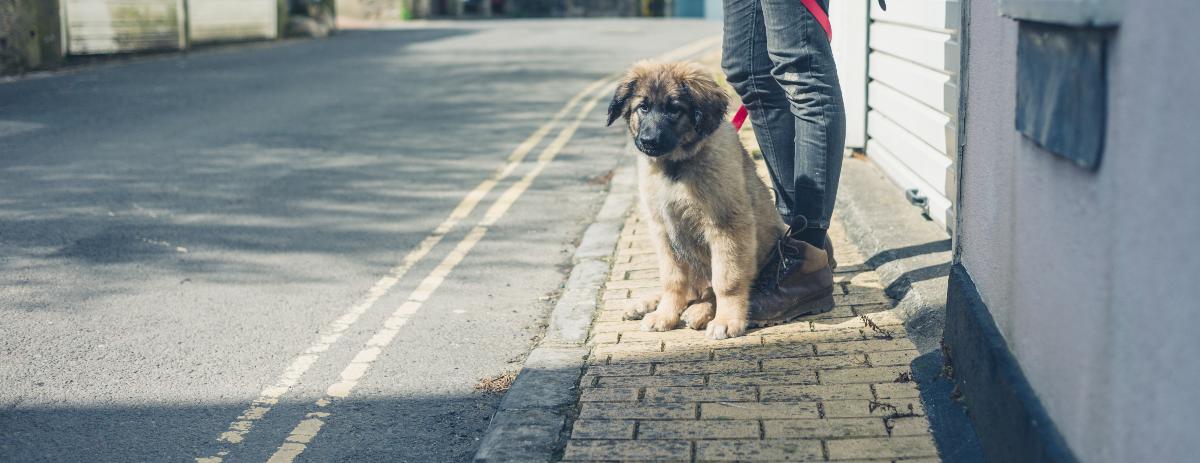 dog-walking-tips-hero