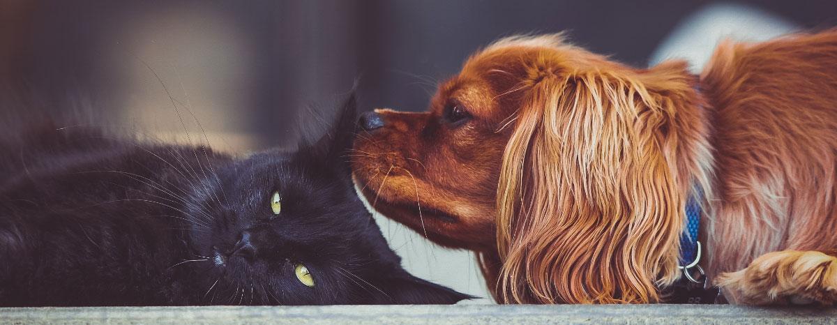 dogcat-hero