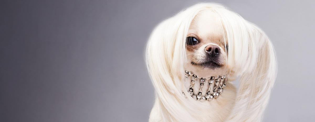 The Diva Dog: Dog Fashion at its Finest
