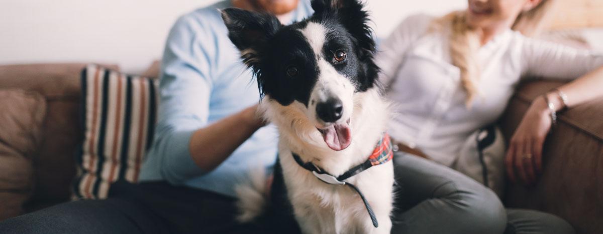 doggo-hero