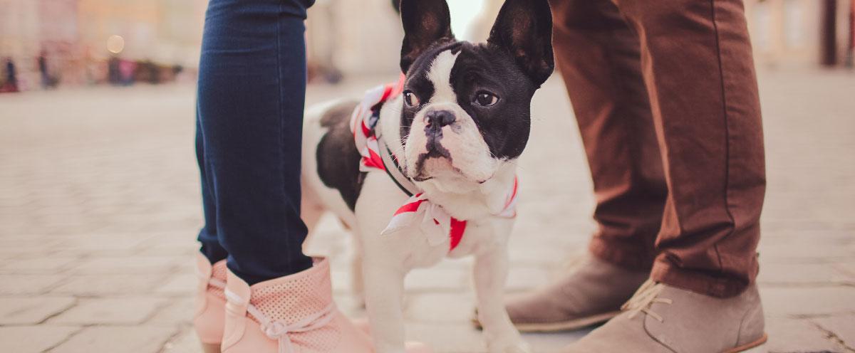 dogs-as-children-hero
