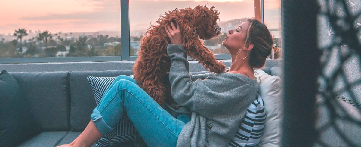 dogs-baby-talk-hero-1