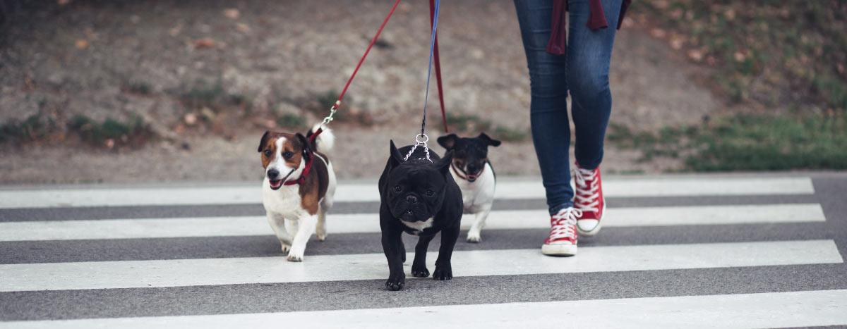 dogwalker-hero
