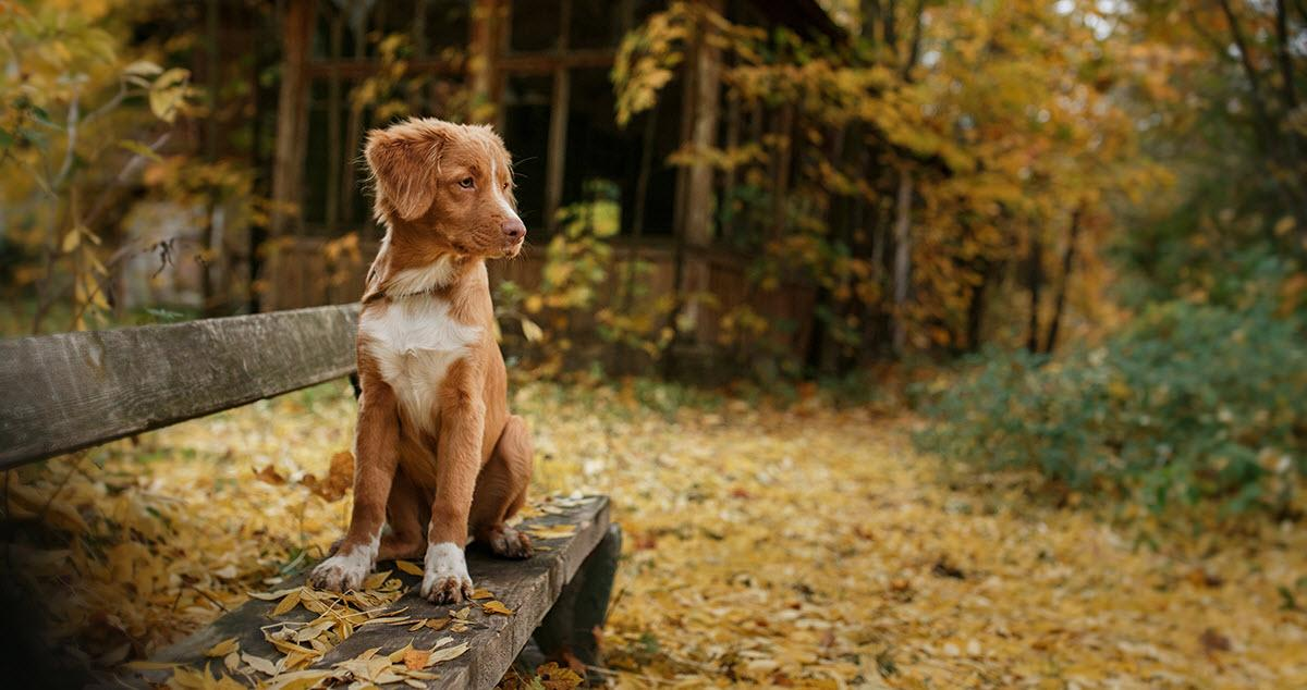 fall-hazards-dog-hero
