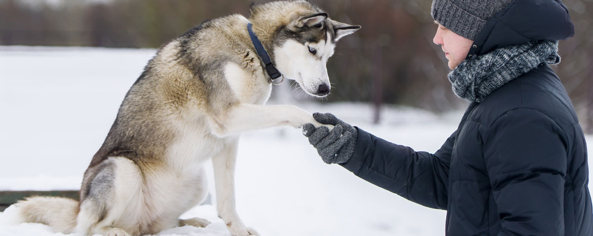 How to Keep Your Dog's New Year's Resolution to Stay Fit