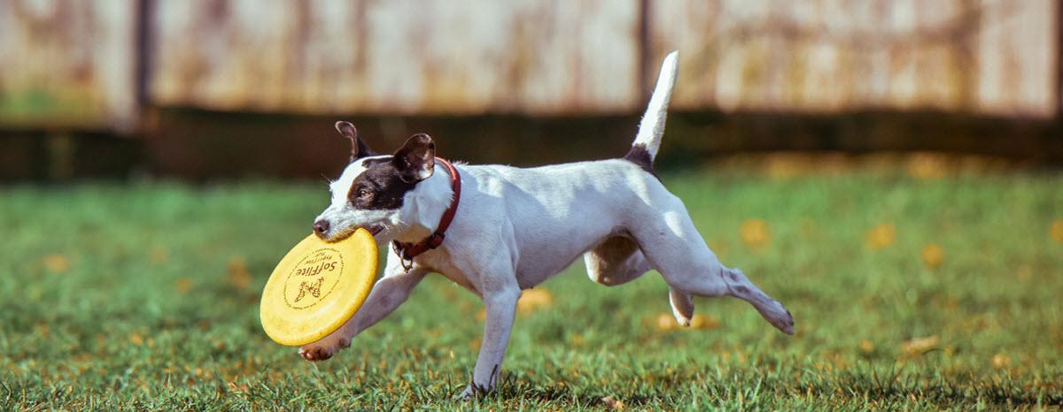 frisbee-desktop-hero