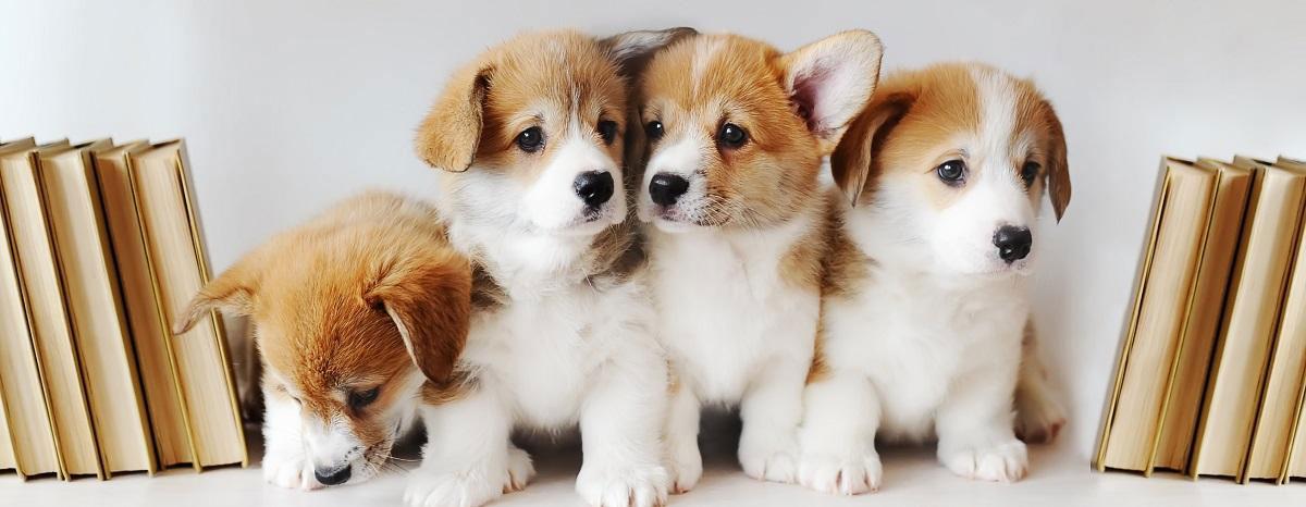 group-of-puppies-hero