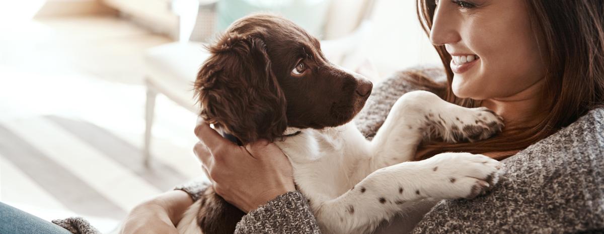 how-to-brushdogs-teeth-hero