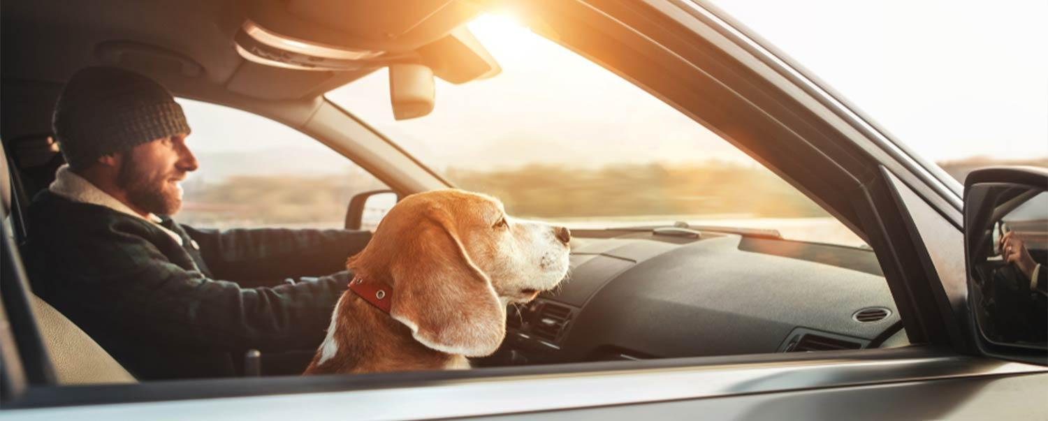 how-to-have-awesome-roadtrip-with-your-dog-hero