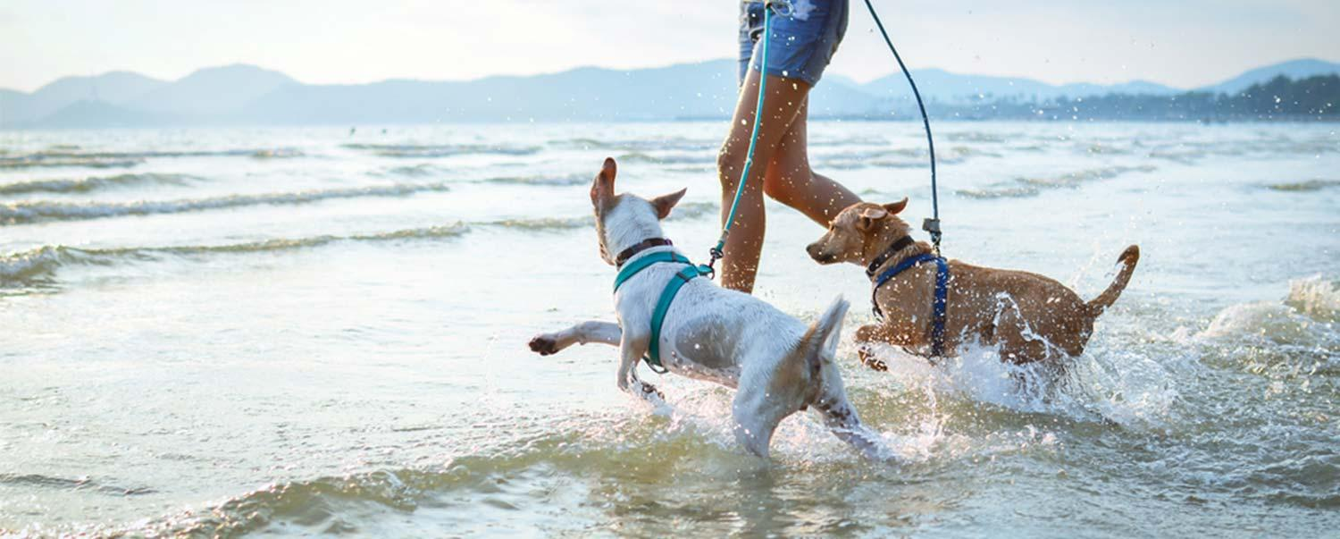 keep-your-dog-healthy-at-beach-hero