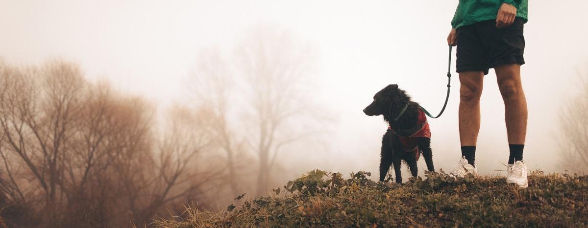 learn-wellness-from-dog-hero