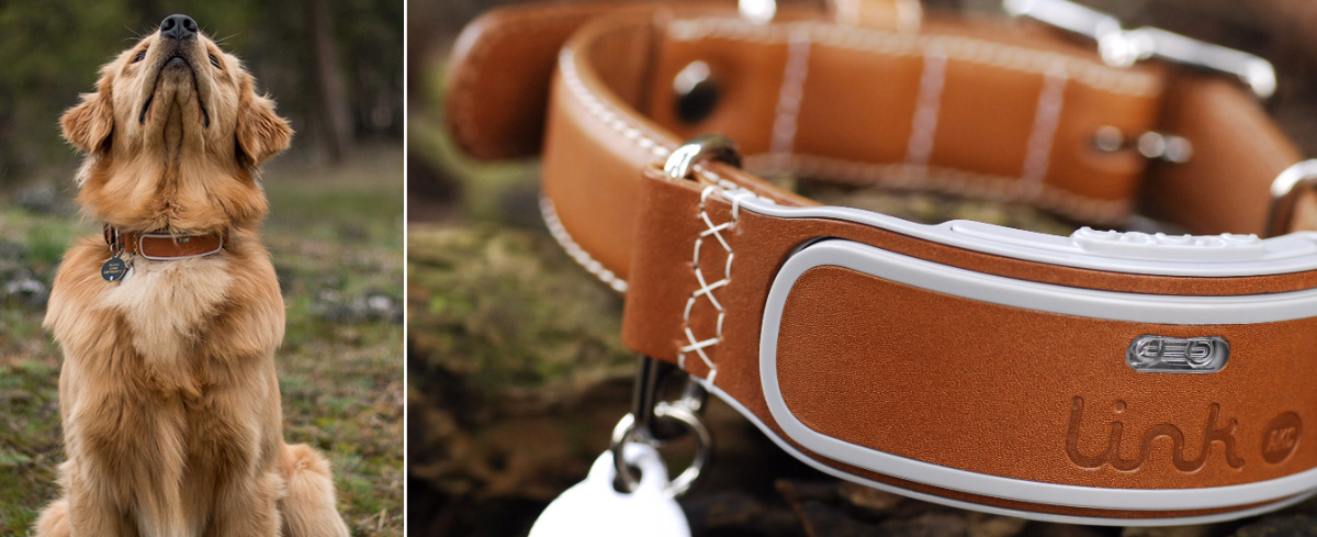 link-akc-smart-collar-features-hero