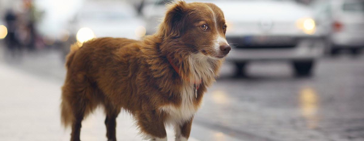 lostdog-desktop-hero