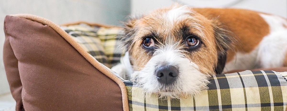 manage-your-dog-noise-phobia-hero