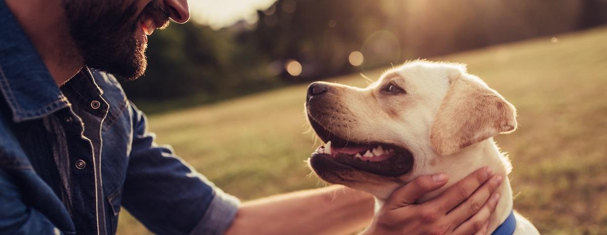 national-dog-day-hero