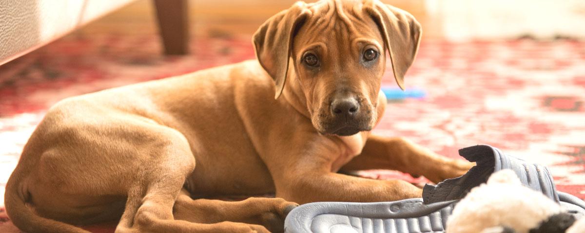 naughty-dog-hero