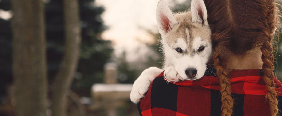 new-puppy-checklist-hero